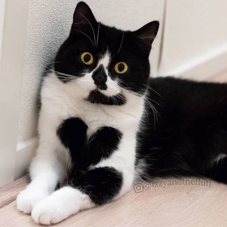 cute cat wears her