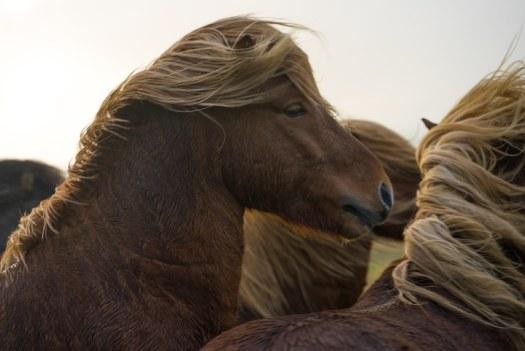 horse art nick turner