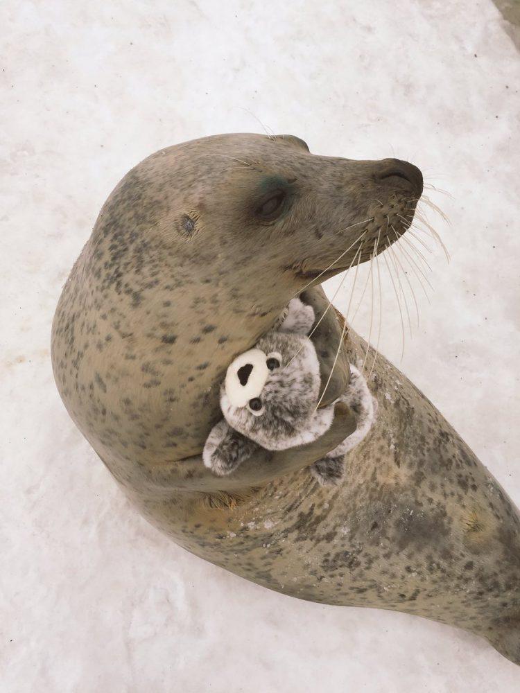 this earless seal hugs