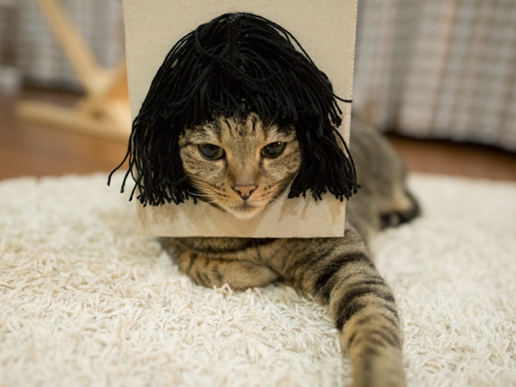 Adorable Cat In A Wig Is None Other Than World Famous Maru