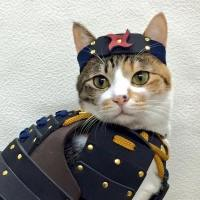 Samurai Pet Costumes Bring Out the Loyal Warrior in Your ...