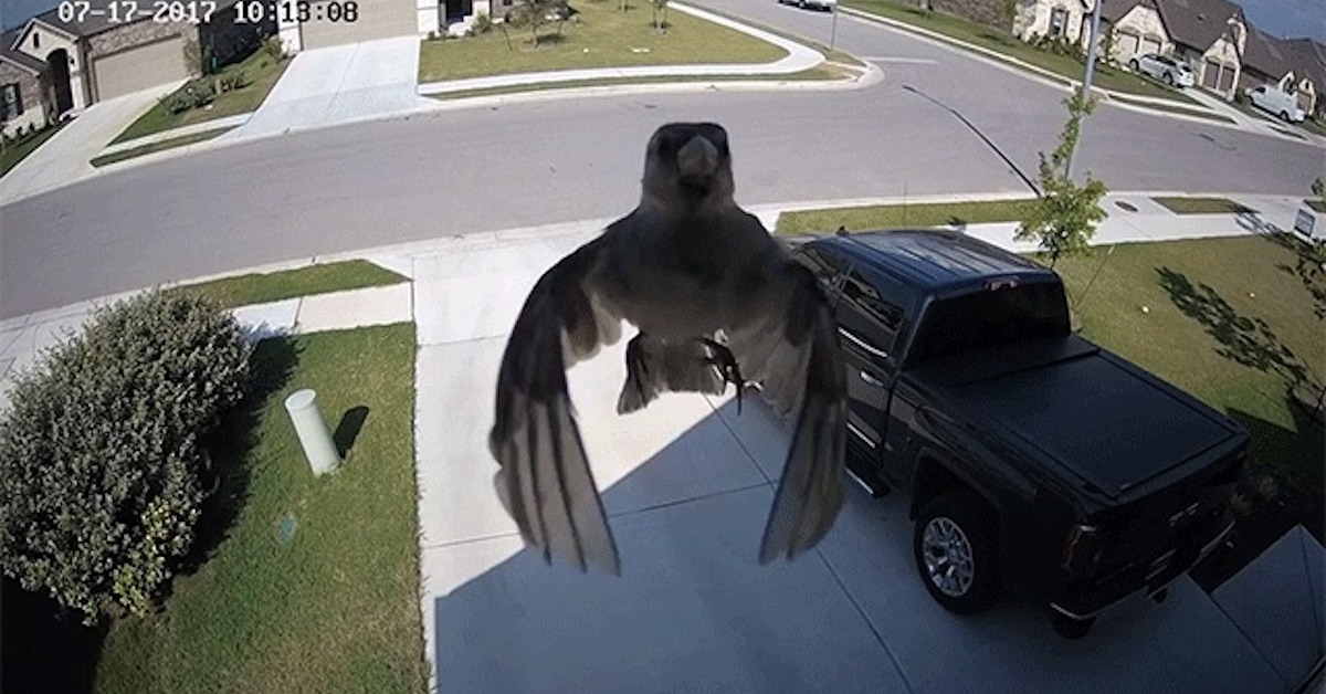 Camera Frame Rate Syncs Up with Bird Wings for