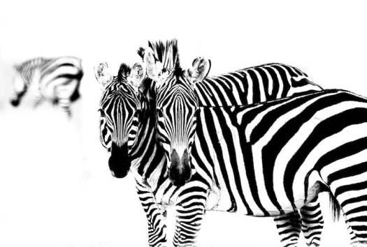 Robert Irwin Nature Photographer