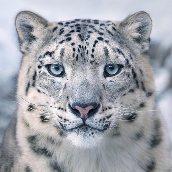 Endangered Animal Bring Humanity In Fragile