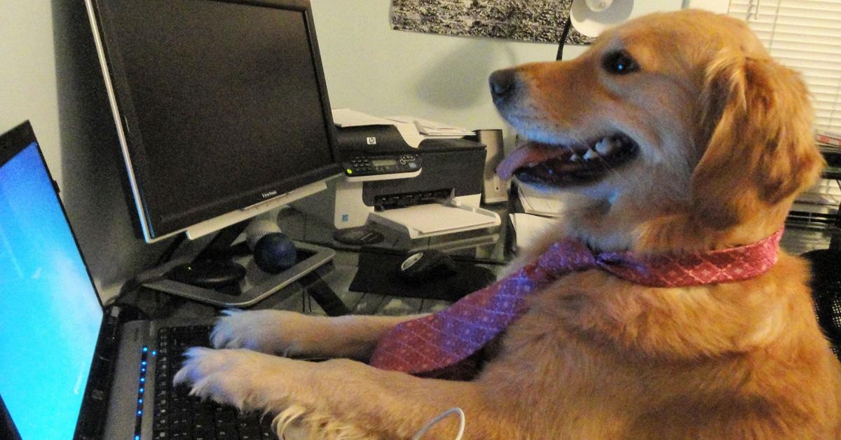Heartfelt Tribute To Golden Bailey Creator Of Funny Dog Memes