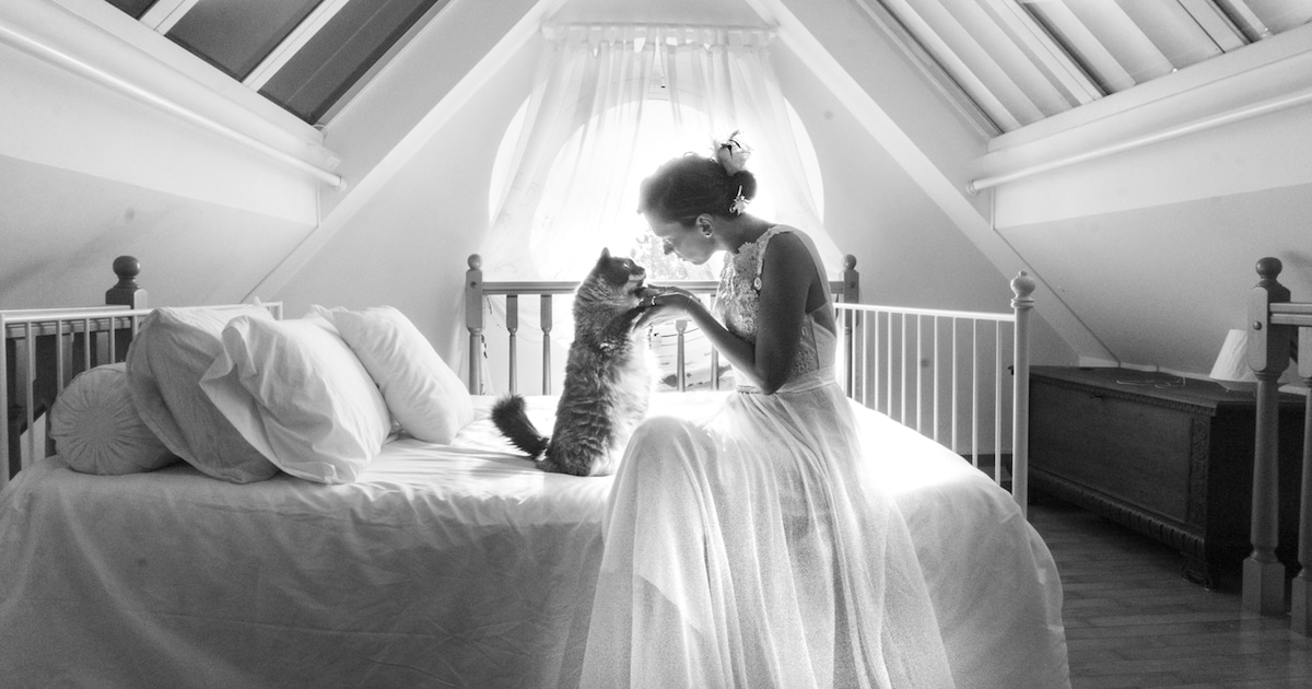 Creative Wedding Photoshoot Ideas Incorporates Cats In The