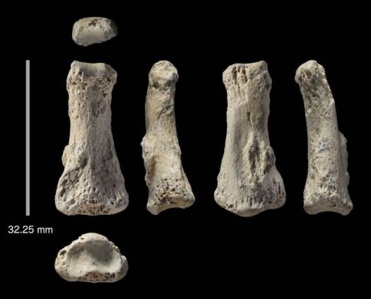 Human Finger Fossil Discovered in Saudi Arabia