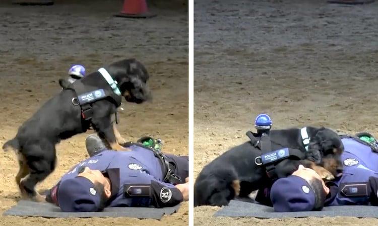 Police Dog CPR Madrid