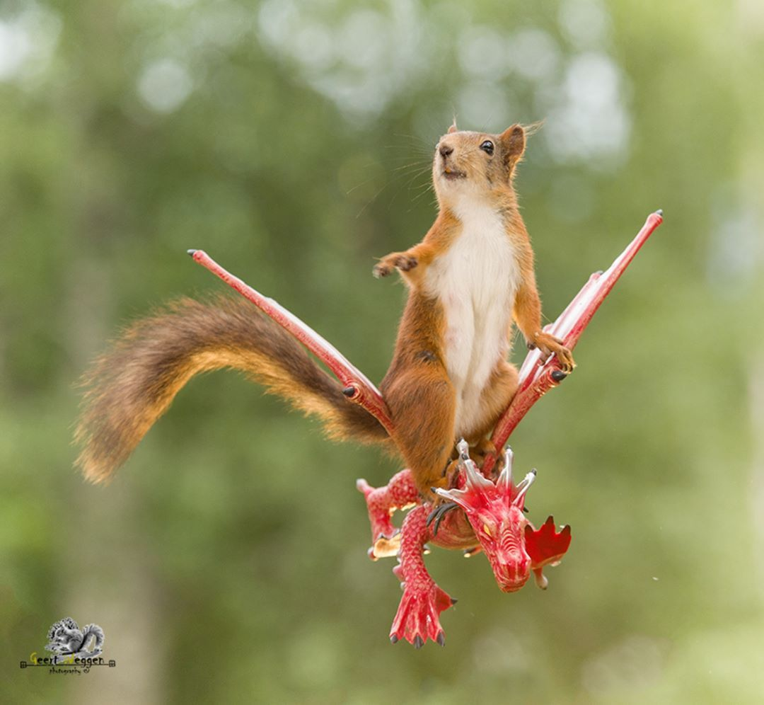 delightfully candid squirrel photos