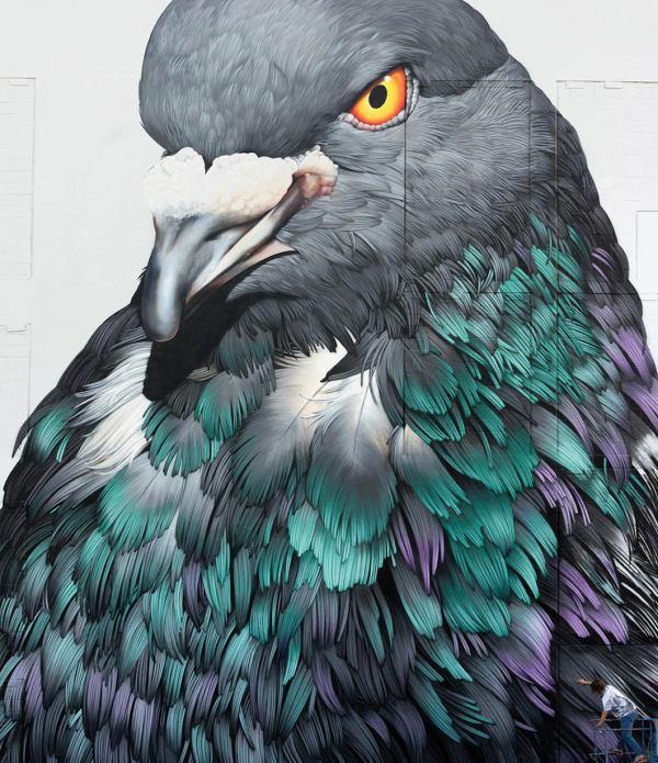 Pigeon Painting Adele Renault Shows Bird'