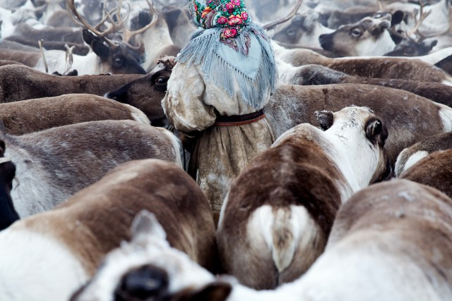 Reindeer Herder in Siberia