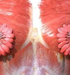 flower throat diagram [ 1170 x 700 Pixel ]