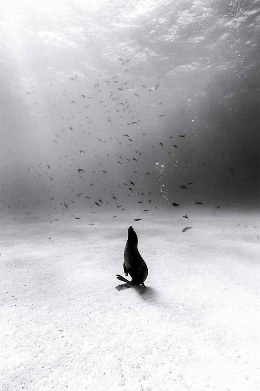 Christian Vizl的黑白水下摄影