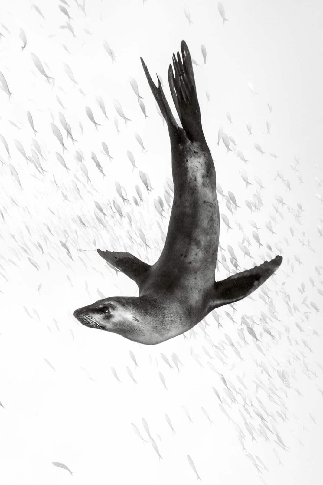 海狮由Christian Vizl