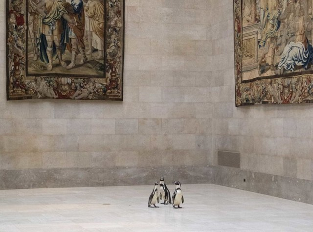 Kansas City Penguins Visit Nelson-Atkins Art Museum