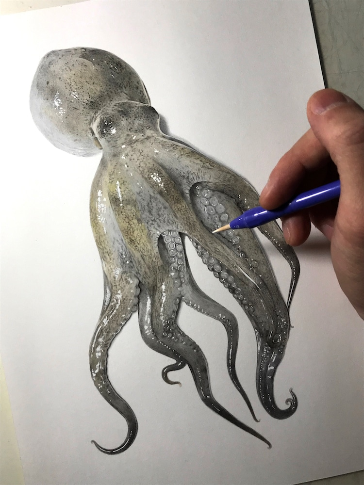 Realistic Octopus Drawing : realistic, octopus, drawing, Illustrator, Shares, Process, Create, Realistic, Drawing, Octopus