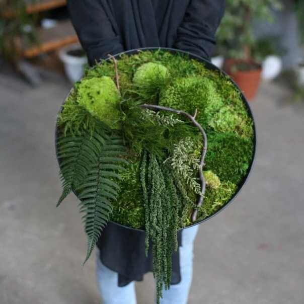 Moss Art by Anna Paschenko
