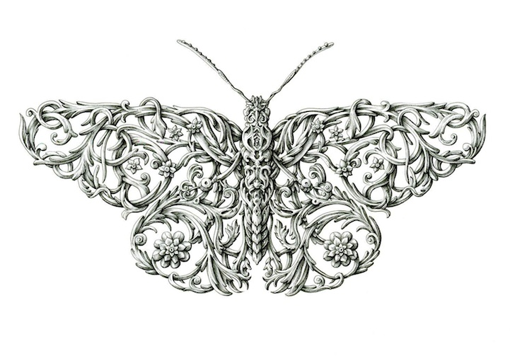 Incredibly Detailed Ink Drawings of Winged Insects by Alex