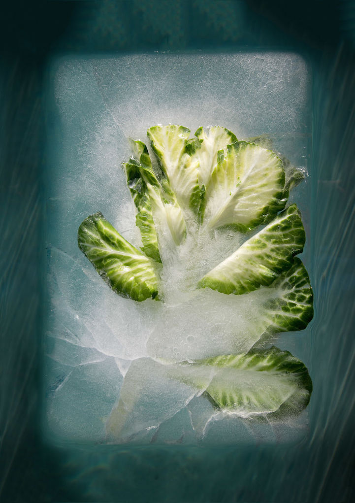 Photos of Frozen Flowers Capture the Paradoxical Beauty of