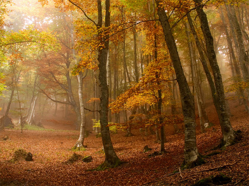 Fall Trees Background Wallpaper Amazing Autumn Forests 15 Photos