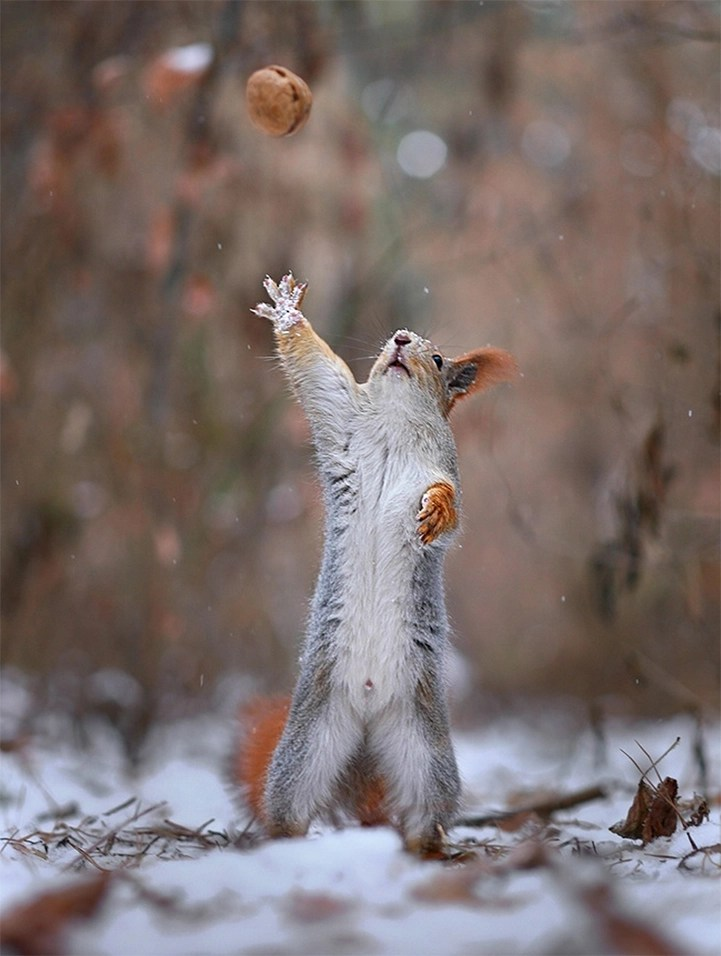 Alone Cute Baby Wallpaper Two Adorable Squirrels Take Photos Play Catch And Build