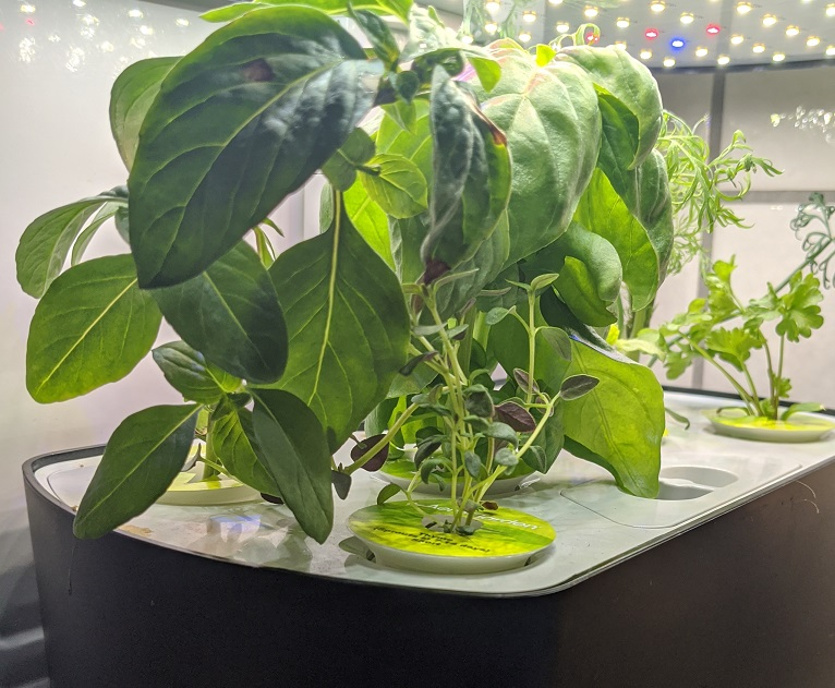 create an indoor garden during quarantine