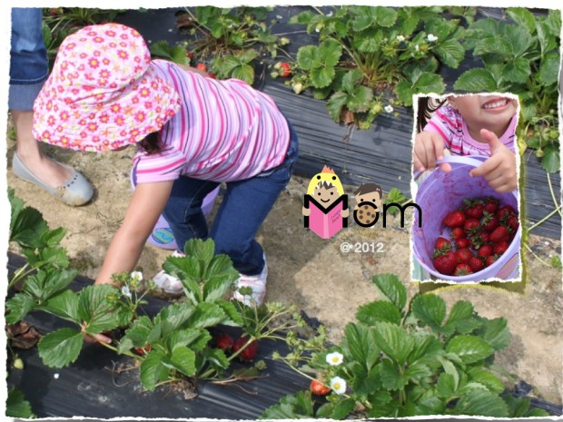 My Mommyology Strawberry Picking