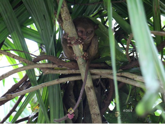 Hello there little primate.