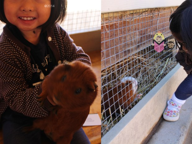 Left:  we caught one!  Right: Jamie talking to another Guinea pig.