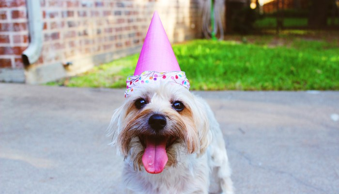 Go Figure: 11 Fun Facts about Pets