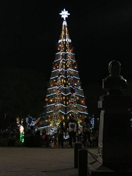 christmas-tree-baguio