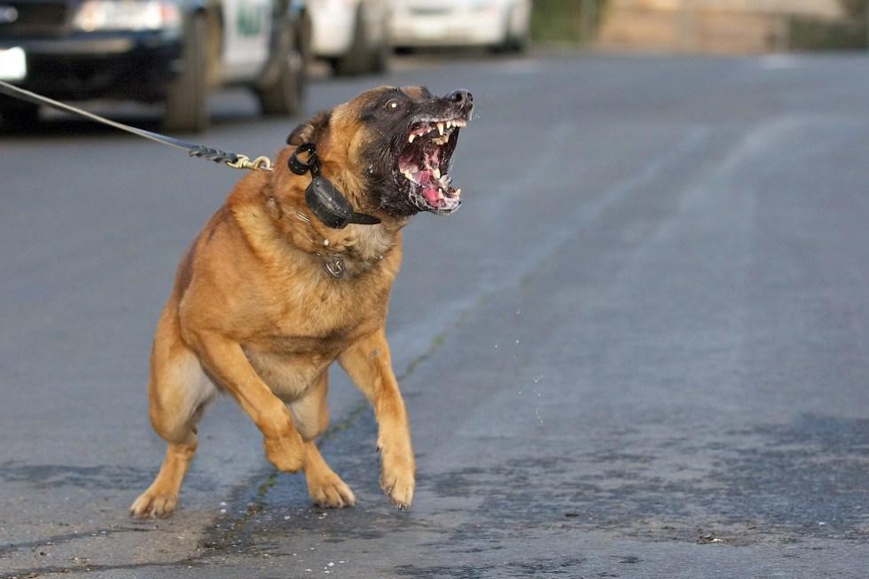 Не переношу собак и боюсь их, в наморднике или на поводке