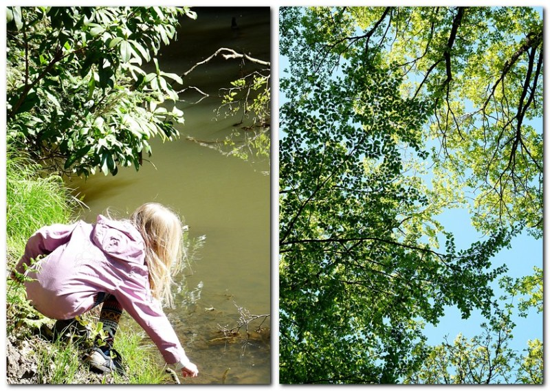 2_Blätterdach im Wald