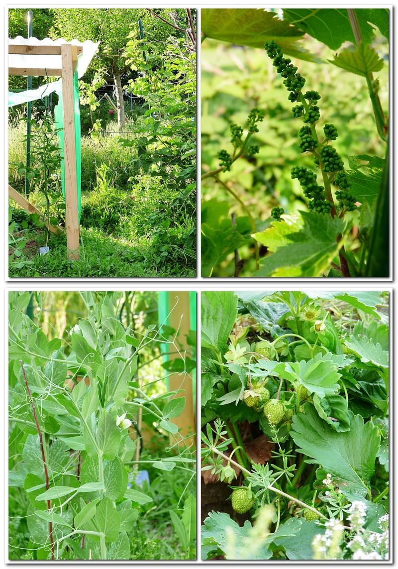 Mein bunter Garten im Mai