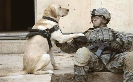 soldiers-and-animals-11-01-2014-24