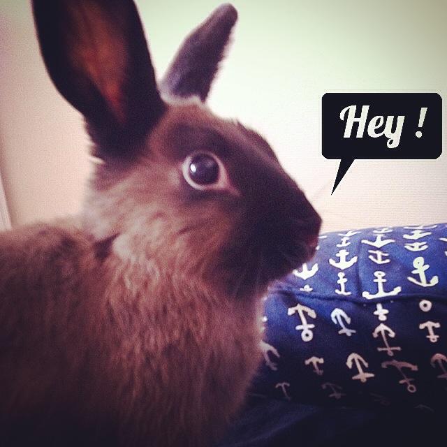 Un lapin en appartement ?