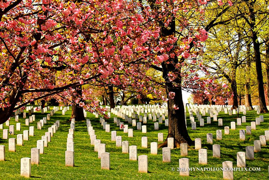 Arlington Cemetery in Spring
