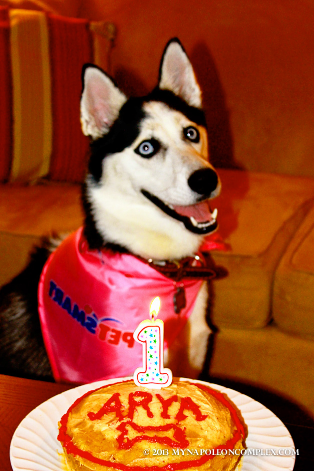 How-To: Make a Doggie Birthday Cake (Happy 1st Birthday, Arya!)