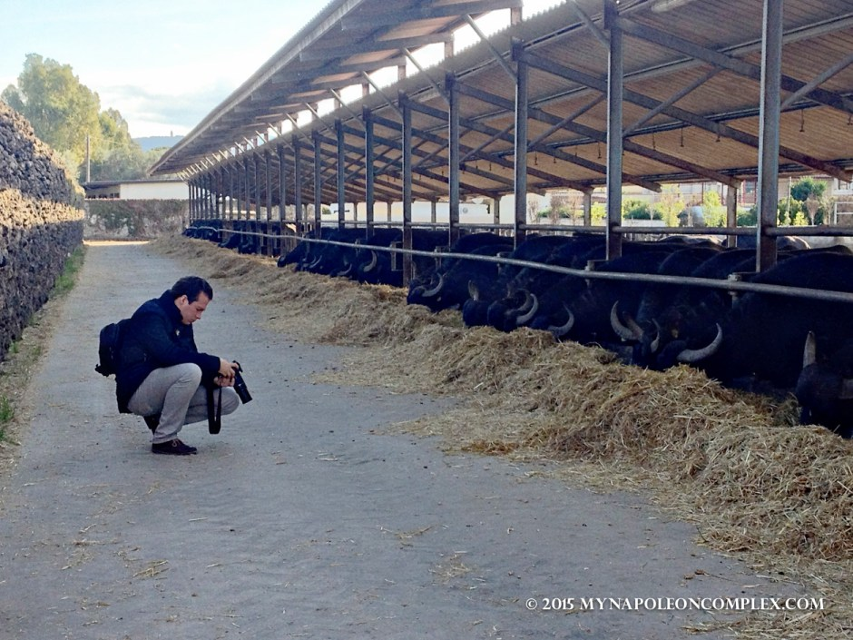 Picture of Bufala farm, Italy