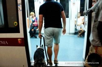 Picture of dog in Rome metro.