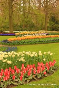 Picture of Keukenhof Garden, the Netherlands