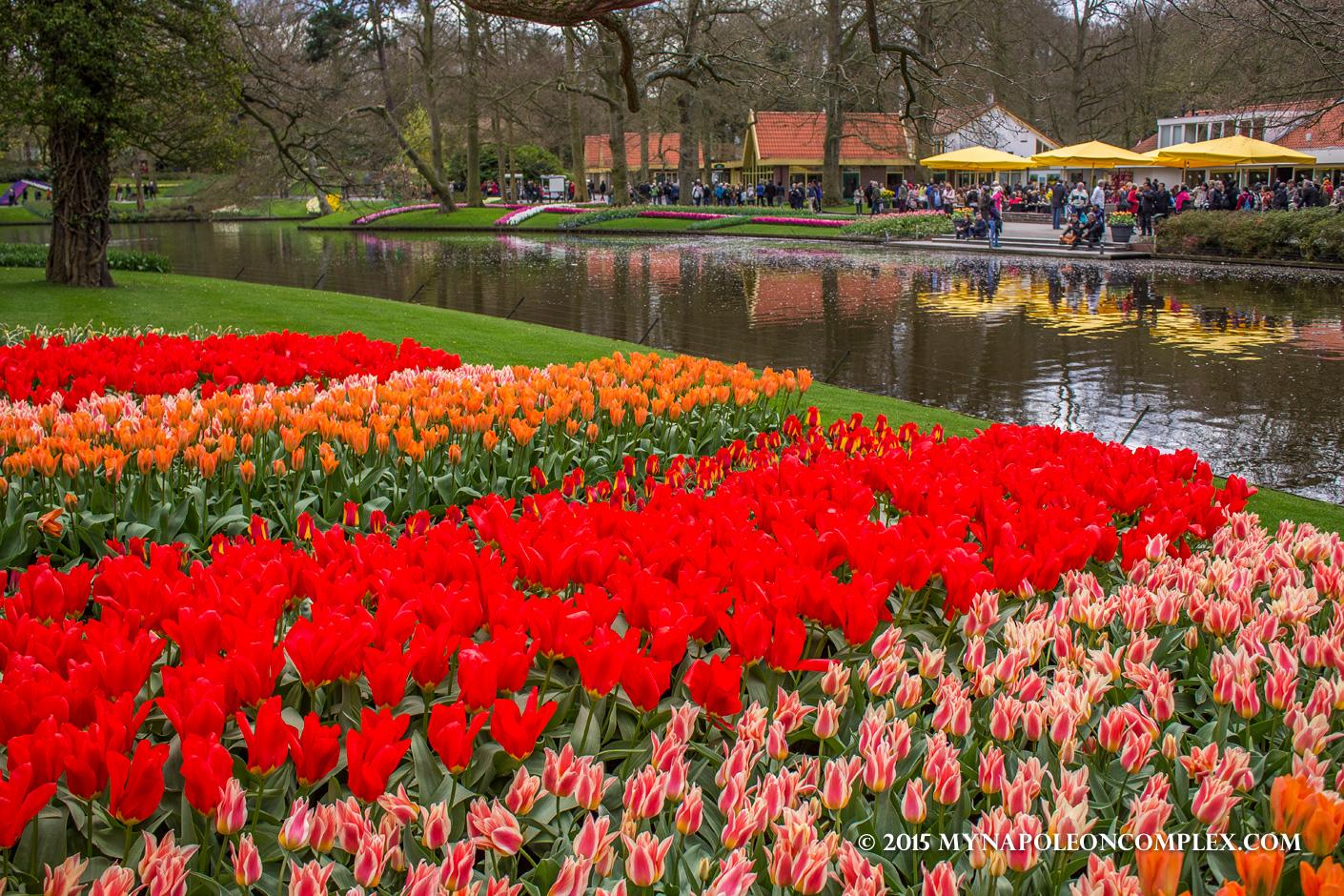 Picture of tulips in Keukenhof Garden, the Netherlands