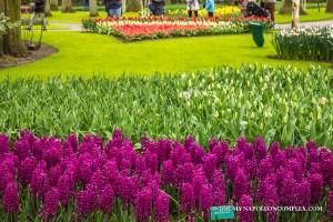 Picture of Keukenhof Garden, the Netherlands.
