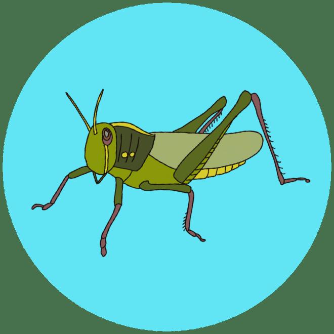 identifying grasshoppers