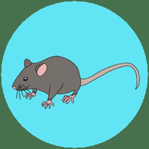 European mouse