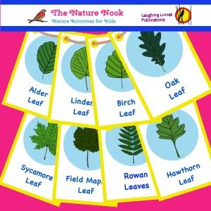 Tree leaves ID