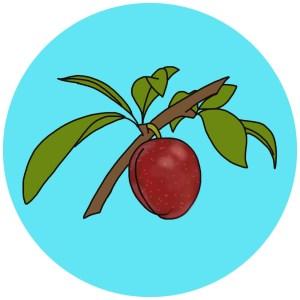 wild plum