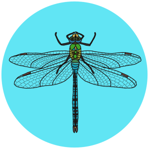 British dragonflies, emperor dragonfly