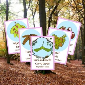 nuts and seeds ID cards, nature flashcards