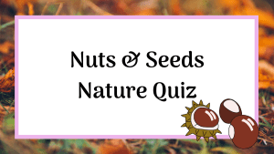nuts and seeds nature quiz